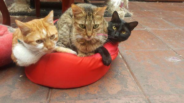 Familia de Adopciones Agatha
